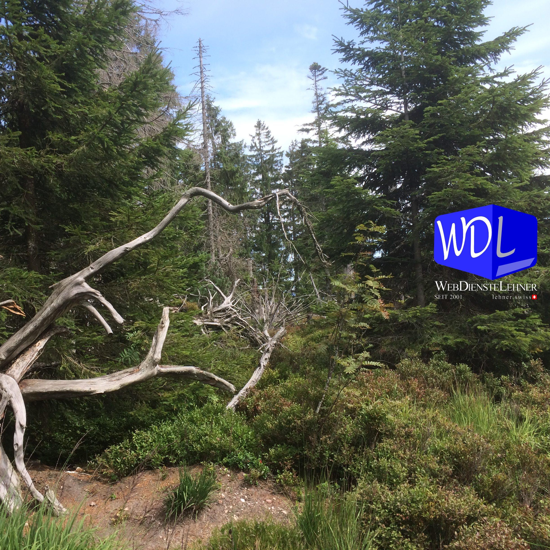WDL WebDiensteLehner